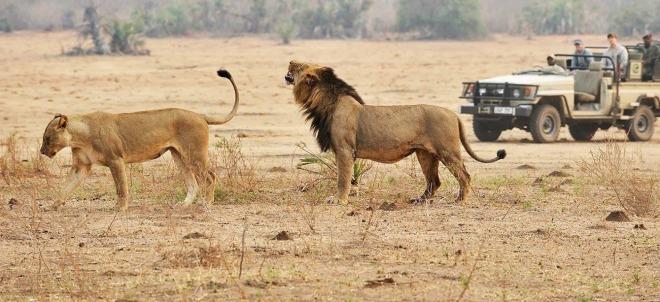 tansania-wahre-wildnis-unberuhrtes-juwel-038-inselparadies-rundreise-1