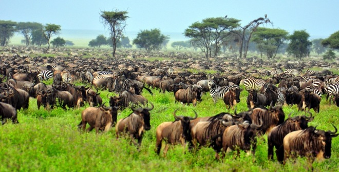 the-great-migration-at-serengeti-national-park-tanzania-africa-shutterstock_51072787-1